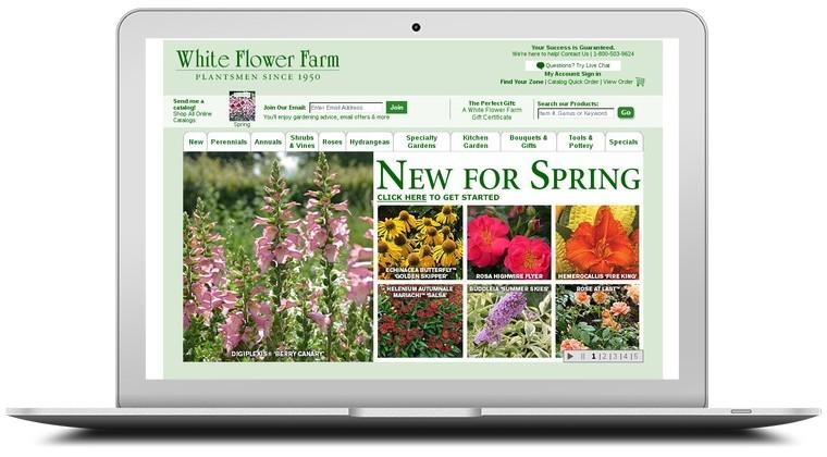 White flower farm coupons whiteflowerfarm coupon codes white flower farm coupons mightylinksfo